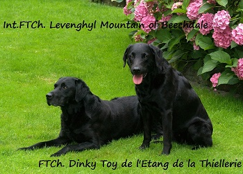 Int.FTCh.Levenghyl Mountain & FTCh.Dinky Toy